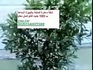 saudi free sex video